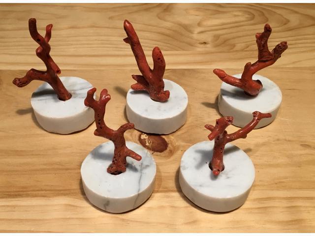 Cinq petites BRANCHES de corail rouge de Méditerranée. Socle de