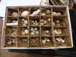 Collection d'oeufs d'oiseaux