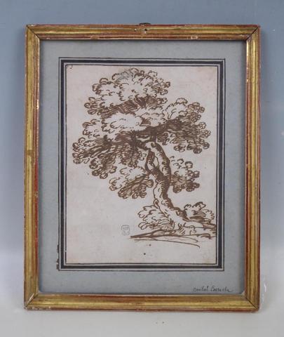 Ecole italienne du XVIIème siècle :  Etude d'arbre  Plume et